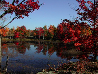 All, Fall, Reflection, Canada, Frontenac Park
