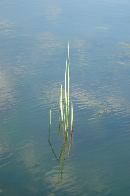 All, Water, Reeds, Canada, West Port