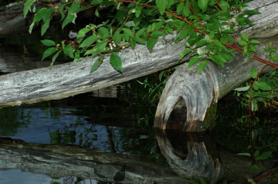 All, Reflection, Log, Canada, Glenburnie