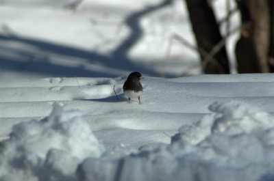 All, Birds, Snow, Canada, Ontario, Glenbernie