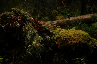 All, Moss, Skagway Hike, USA, Skagway