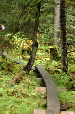 All, Trail, Trees, Skagway Hike, USA, Skagway