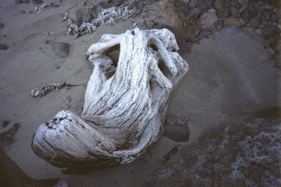 All, Campbell River,Canada,British Columbia,Frost, Driftwood