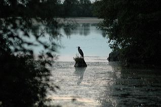 All, Silhouettes, Birds, Blue, Blue Heron